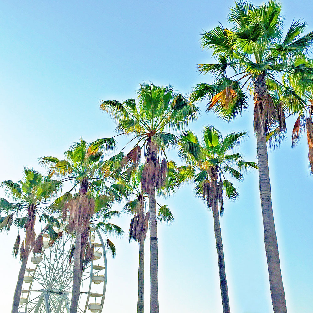 Travel Colorfully A Guide To Long Beach Vandi Fair